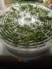 Сушилка для овощей и фруктов АКСИОН Т 33,  белый,  5 поддонов вид 11